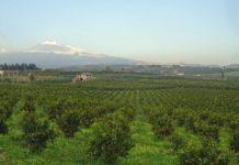 frutta biologica coltivazioni agricoltura Etna