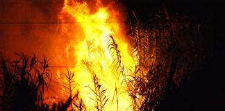 incendio foresta bosco