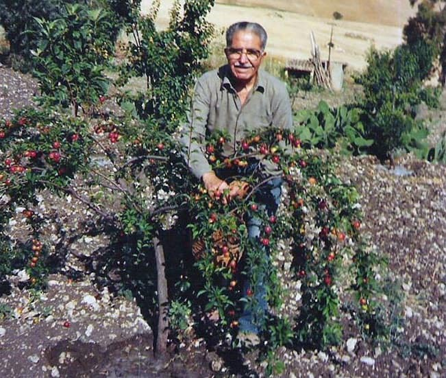 Michele Pantaleone
