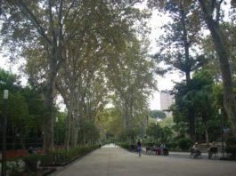 villa Bellini, alberi
